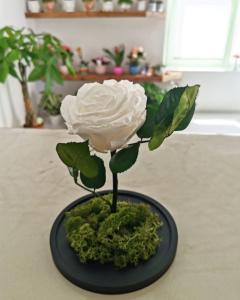 santorini free flower delivery